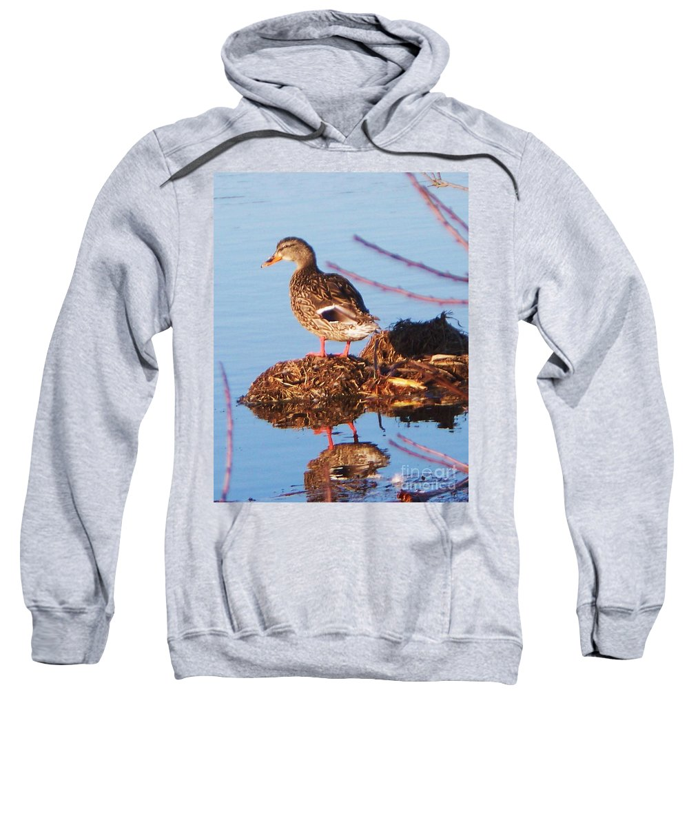 Comedian Sweatshirt featuring the photograph Comedian Duck by Eric Schiabor