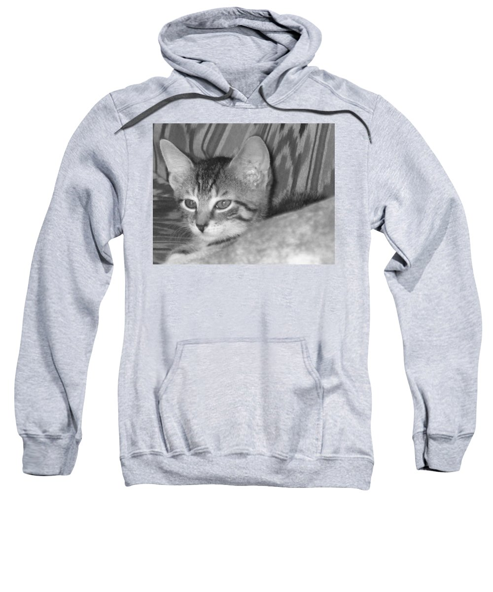 Kitten Sweatshirt featuring the photograph Comfy Kitten by Pharris Art