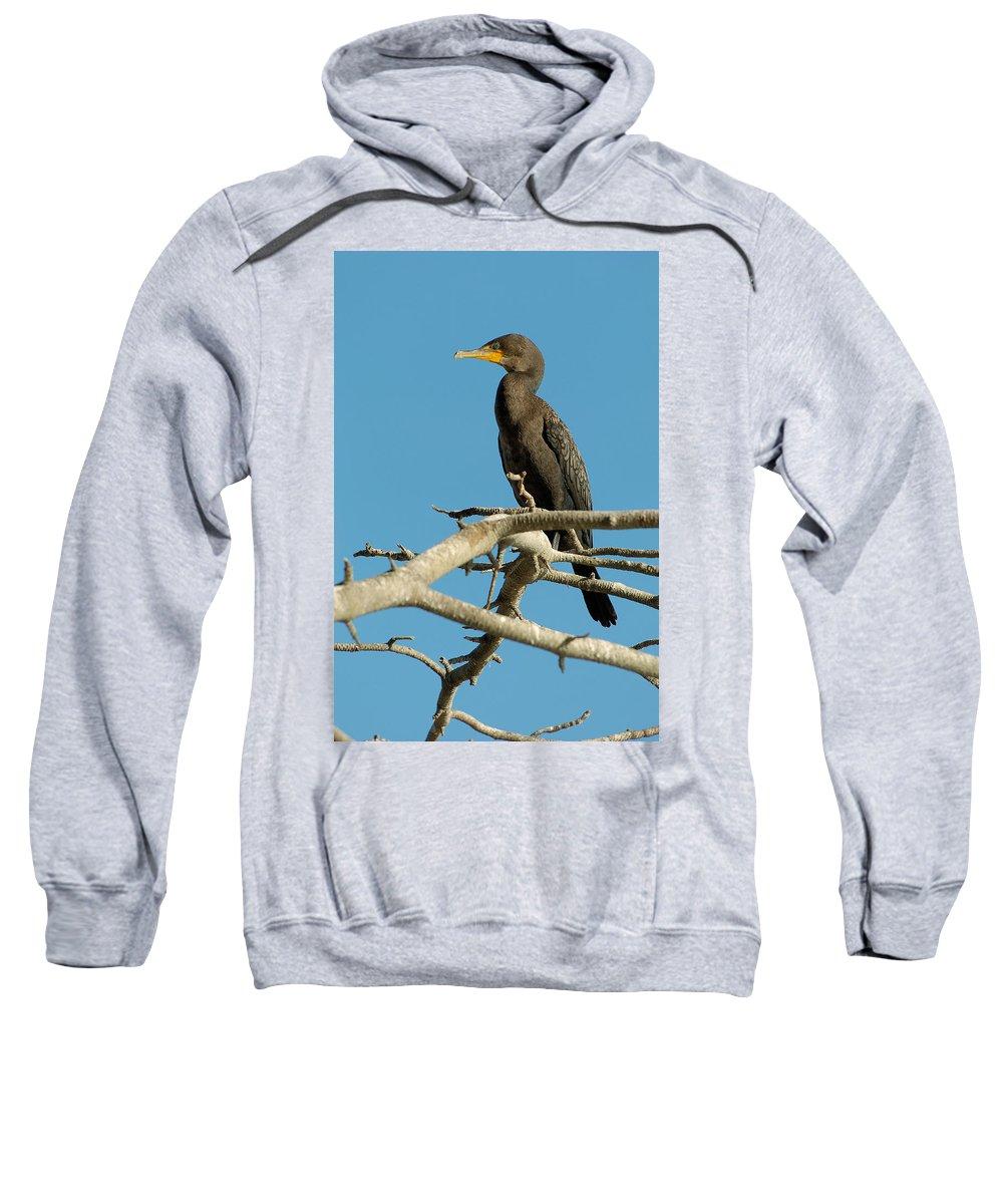 Cormorants Sweatshirt featuring the photograph Cormorant by Sebastian Musial