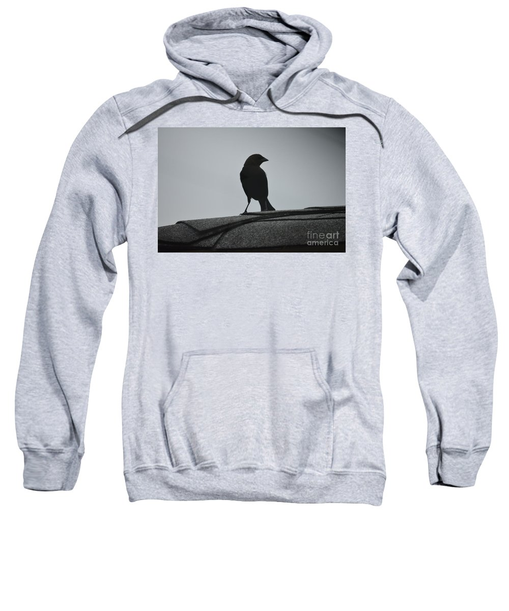 Cardinals Sweatshirt featuring the photograph Cow Bird Silhouette by Barb Dalton