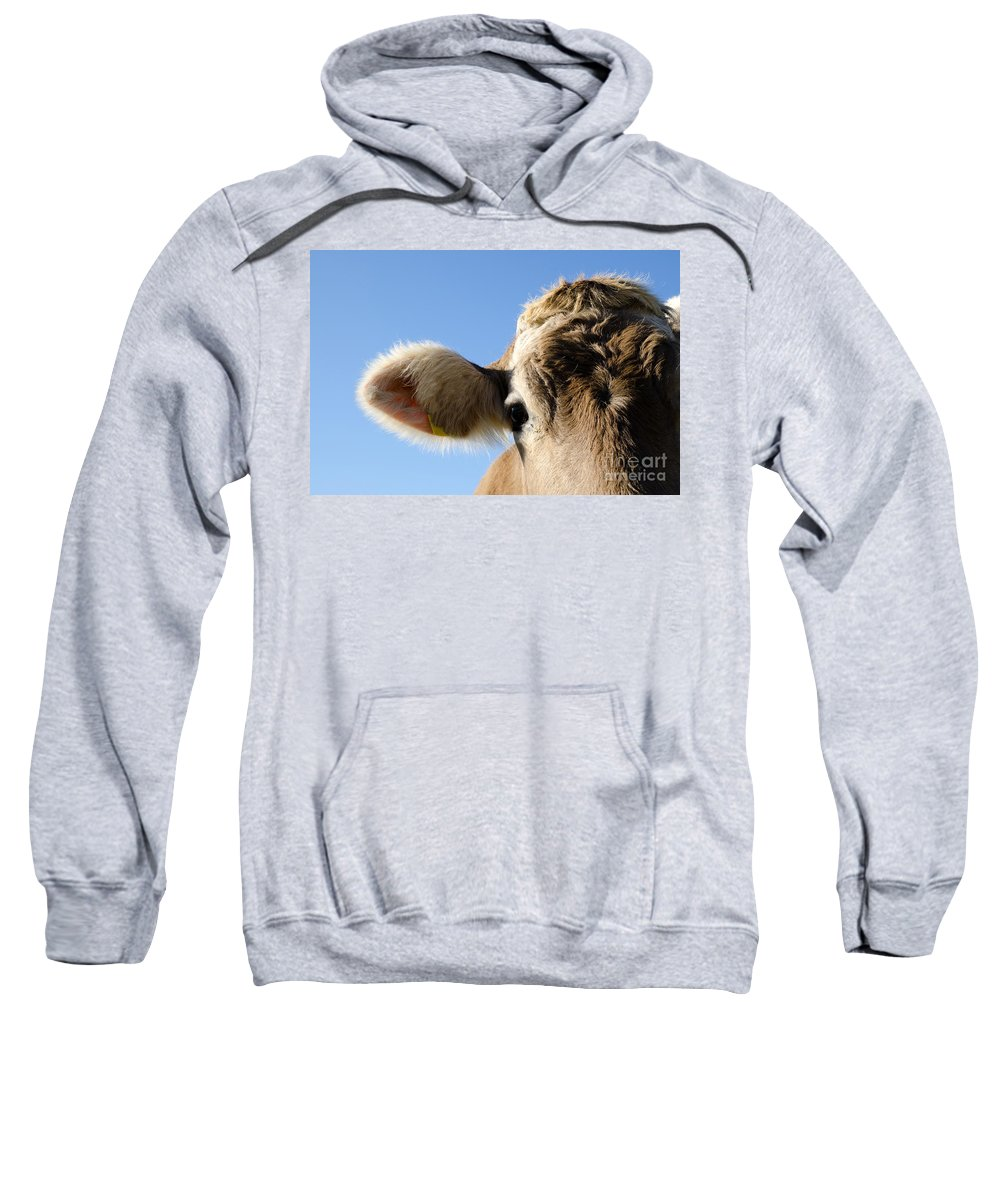 Cow Sweatshirt featuring the photograph Cow by Mats Silvan
