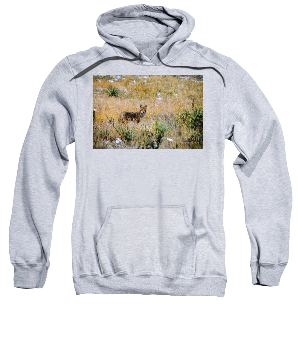 Animal Sweatshirt featuring the photograph Coyotes by Steve Krull
