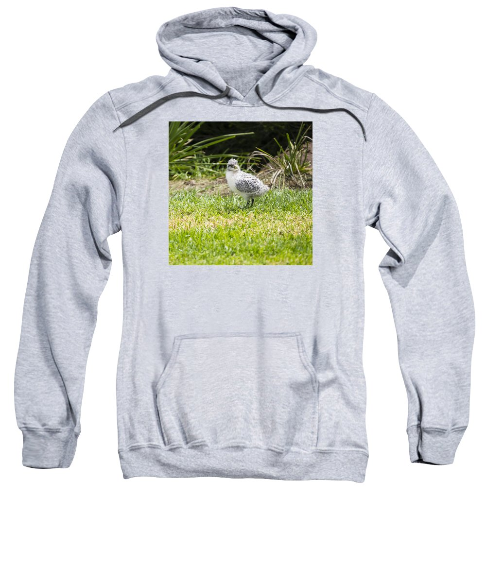 Australia Sweatshirt featuring the photograph Crested Tern Chick - Montague Island - Australia by Steven Ralser