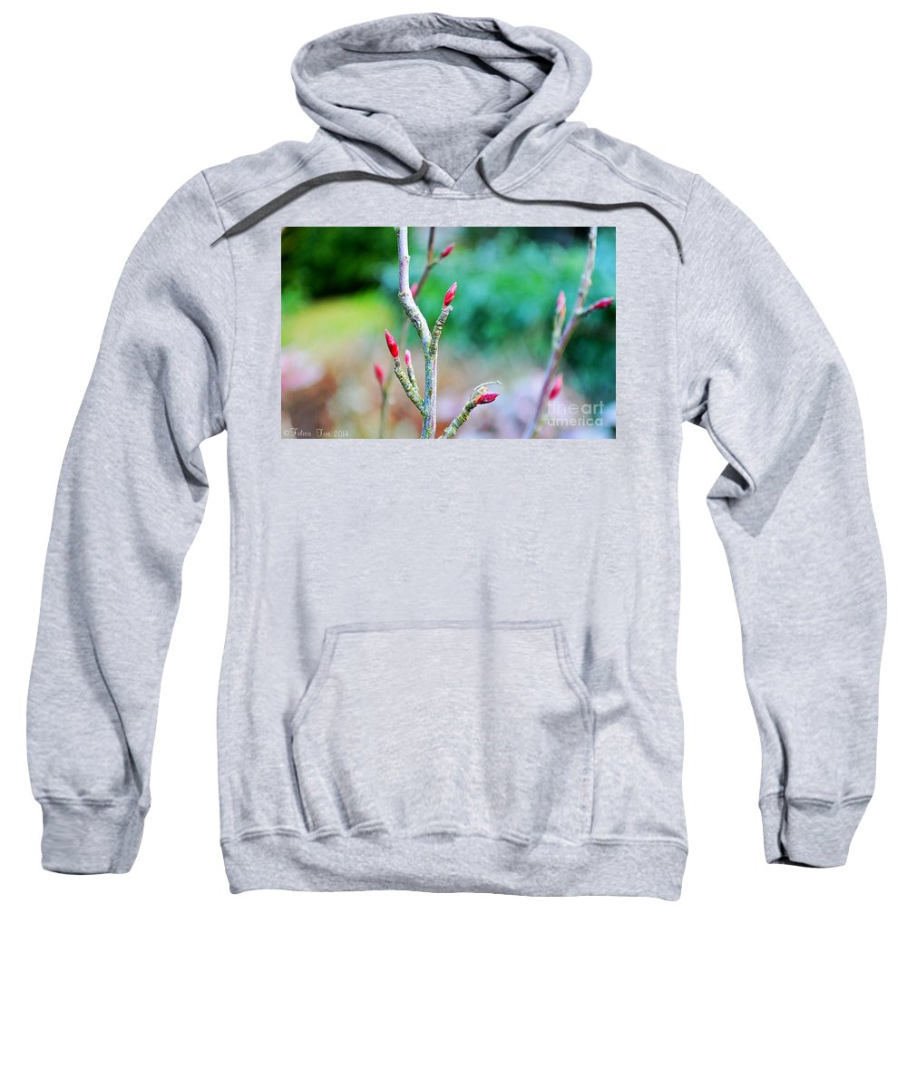 Tree Buds Sweatshirt featuring the photograph Crisp And Bracing by Felicia Tica