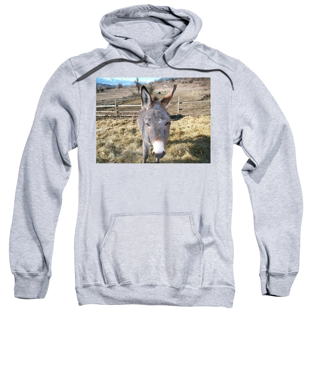 Animals Sweatshirt featuring the photograph Curious Donkey by Zak