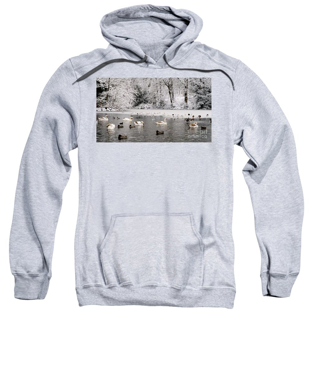 Cygnet Sweatshirt featuring the photograph Cygnets In Winter by John Chatterley