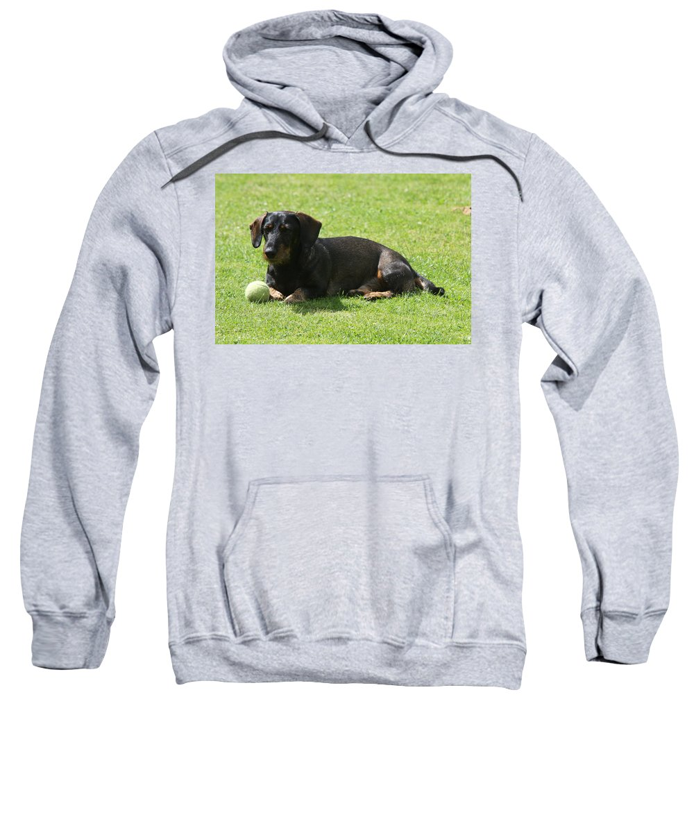 Dog Sweatshirt featuring the photograph Dachshund Wants To Play by Christiane Schulze Art And Photography