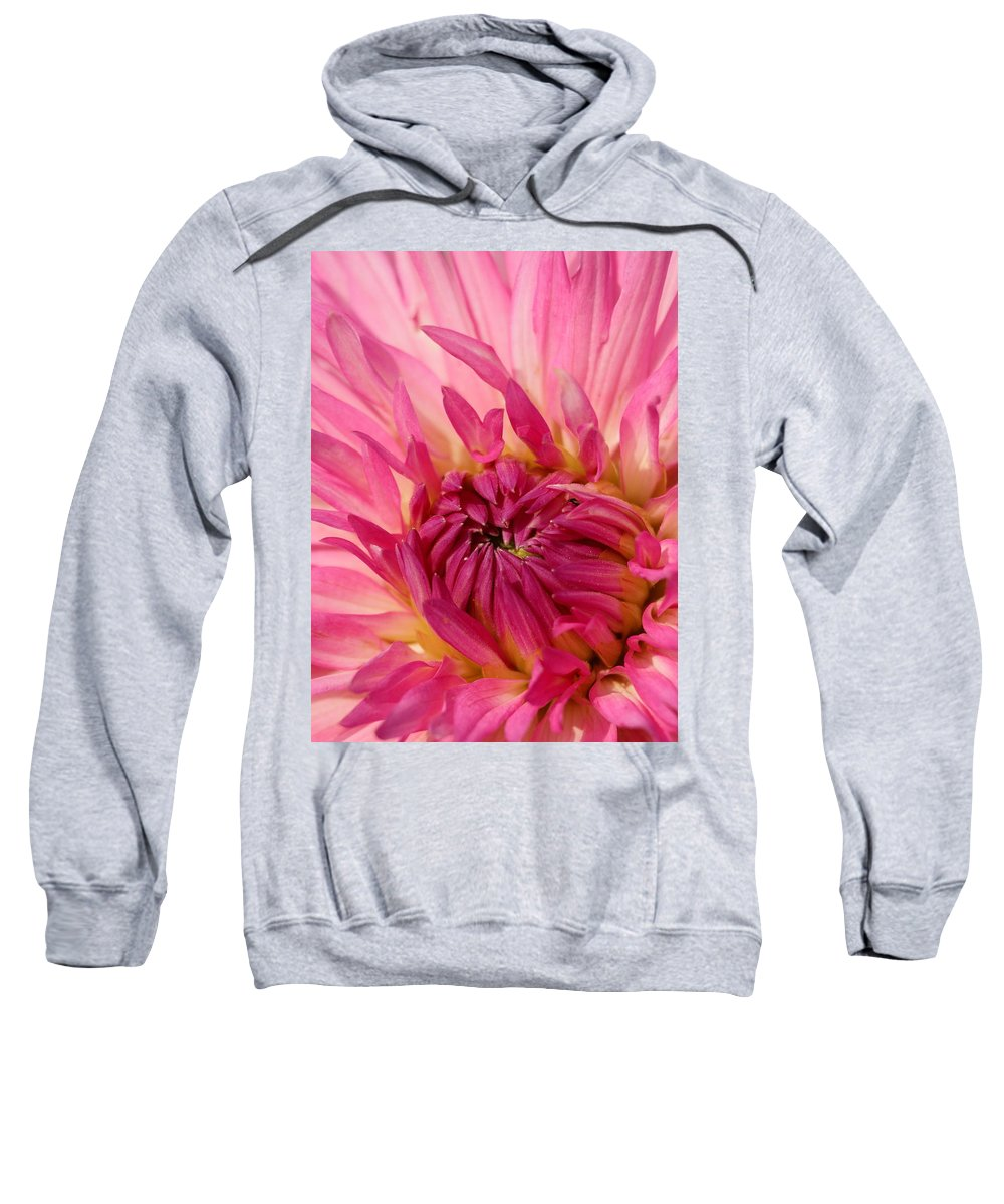 Flower Sweatshirt featuring the photograph Dahlia 2am-104251 by Andrew McInnes