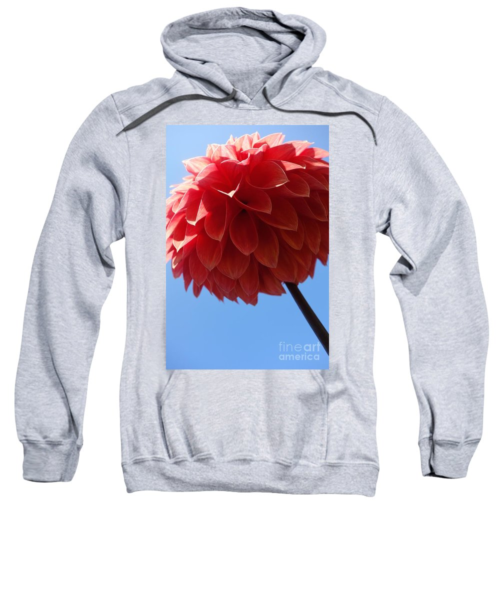 Flowing Sweatshirt featuring the photograph Dahlia #3 by Jacqueline Athmann