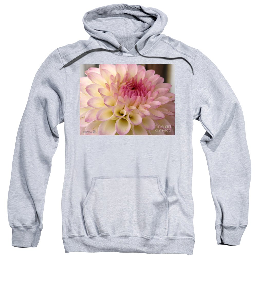 Dahlia Sweatshirt featuring the photograph Dahlia Named Brian's Dream by J McCombie