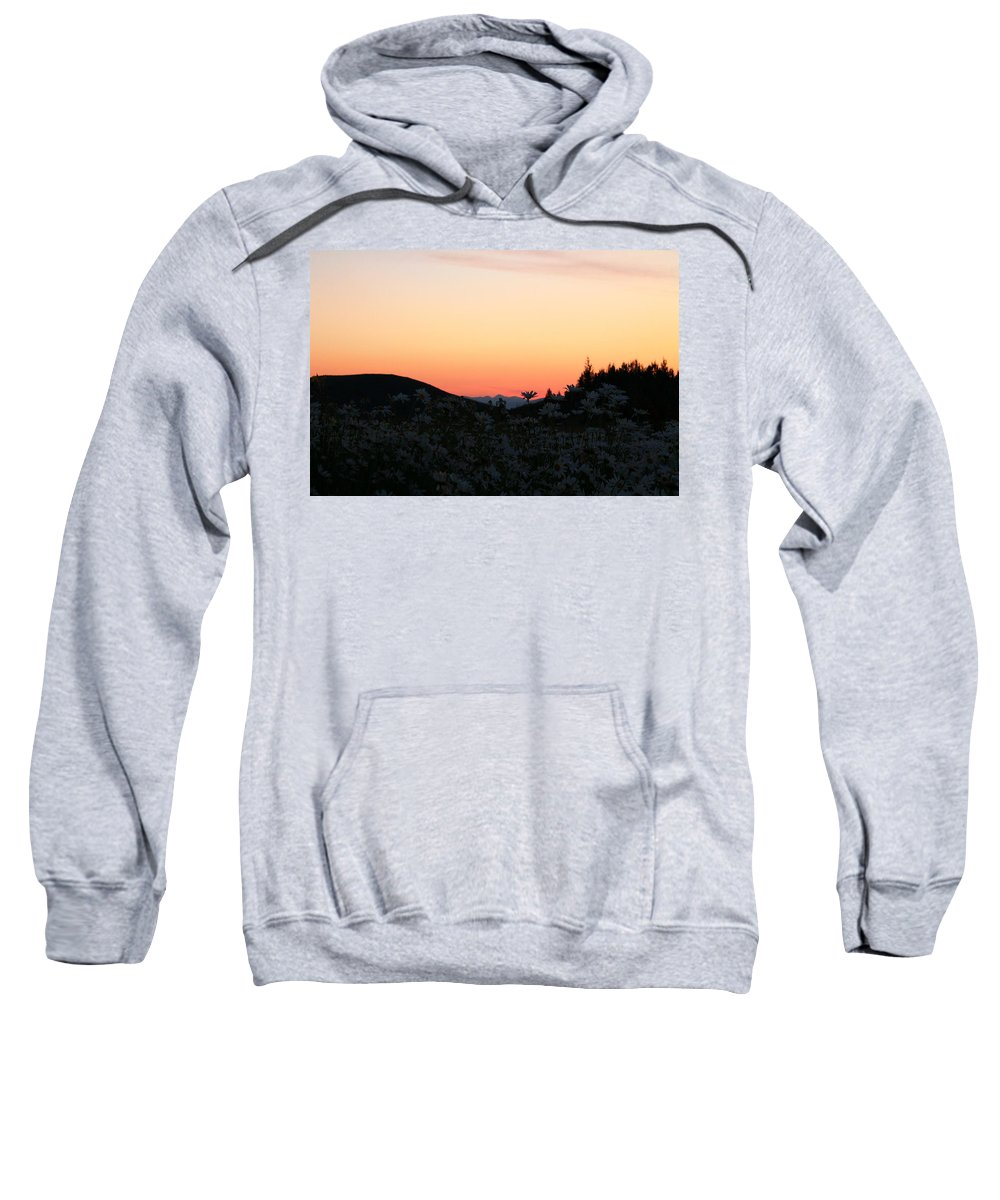 Jackson Hole Sweatshirt featuring the photograph Daisies And Sunrise by Catie Canetti