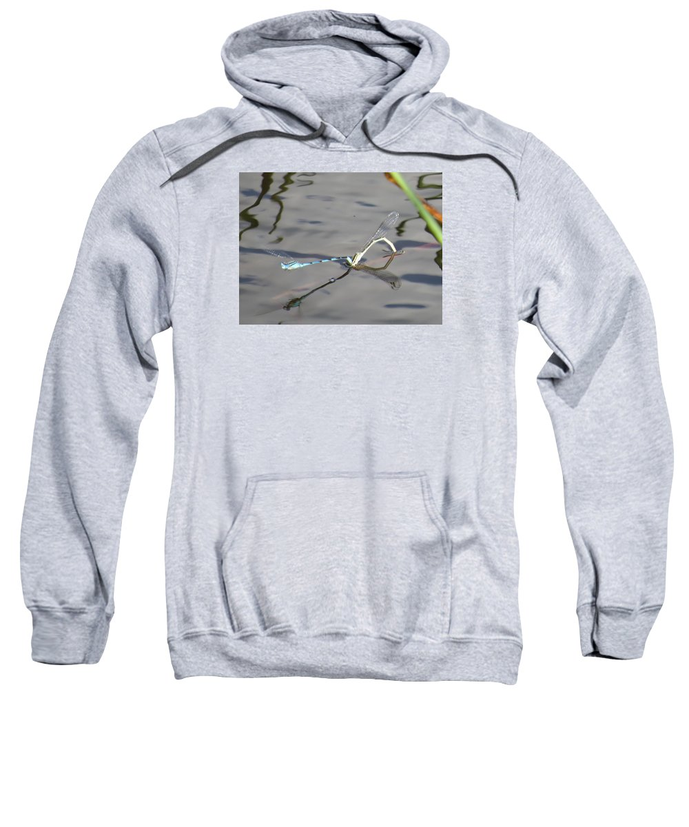 Dragonflies Mating Sweatshirt featuring the photograph Damselflies Mating II by Zina Stromberg