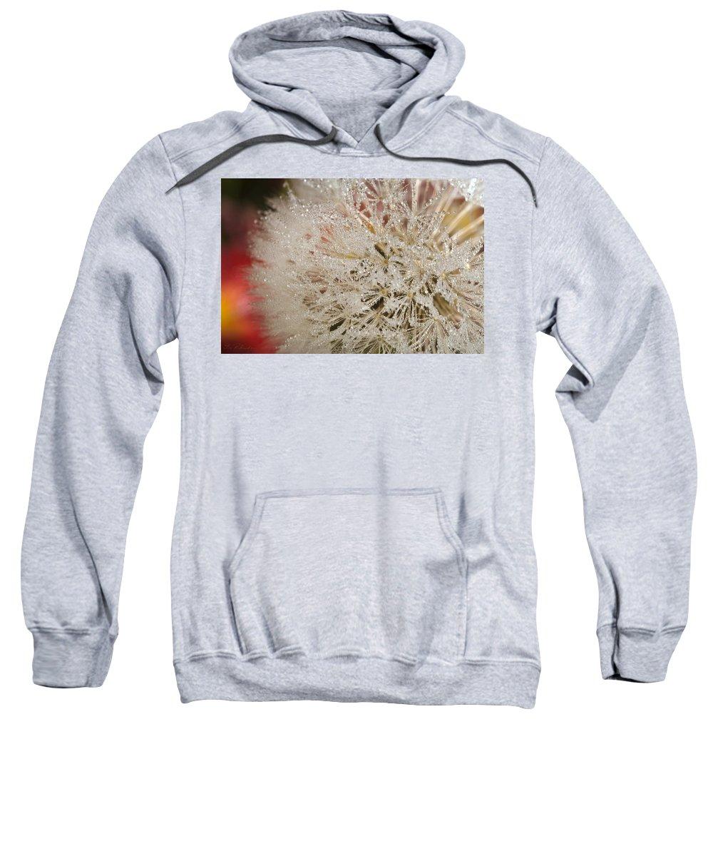 Iris Holzer Richardson Sweatshirt featuring the photograph Dandelion Crystals by Iris Richardson
