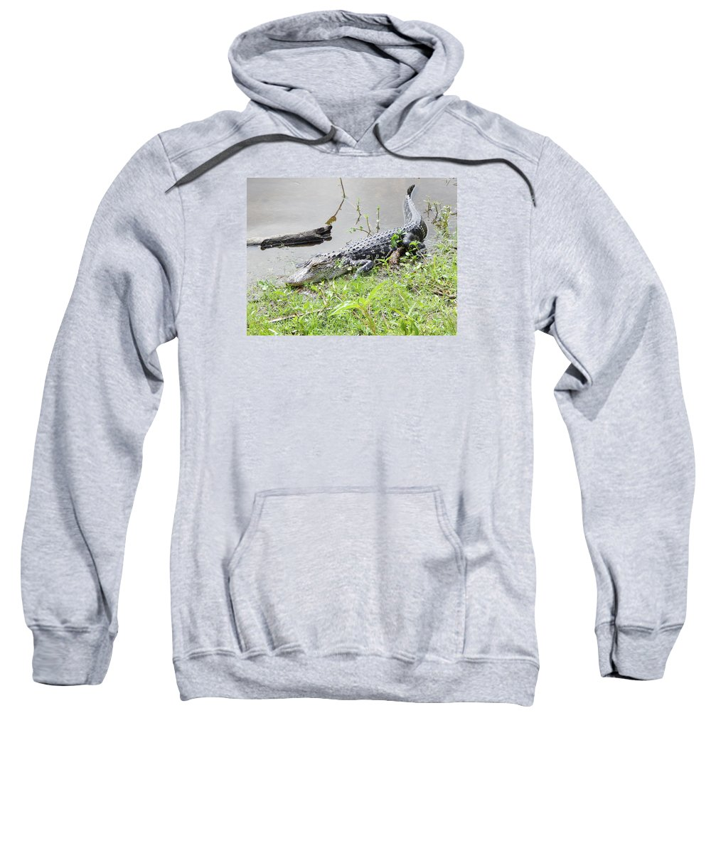 Florida Fresh Water Alligator. Alligator In Florida Lake Sweatshirt featuring the photograph Danger Danger Will Robinson by Terry Baker