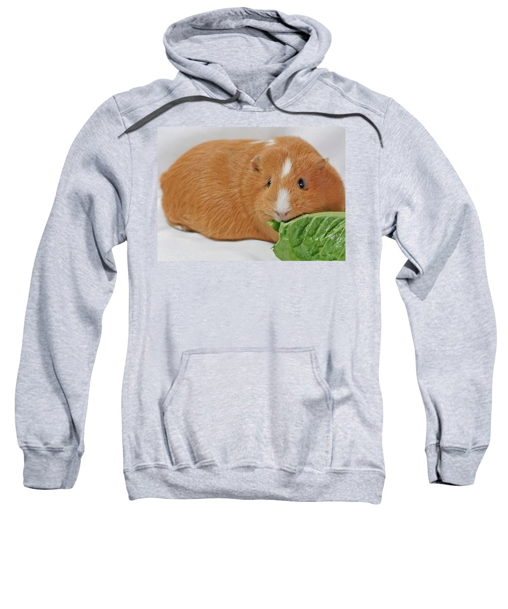 Animals Sweatshirt featuring the photograph Daphne by Lisa Phillips