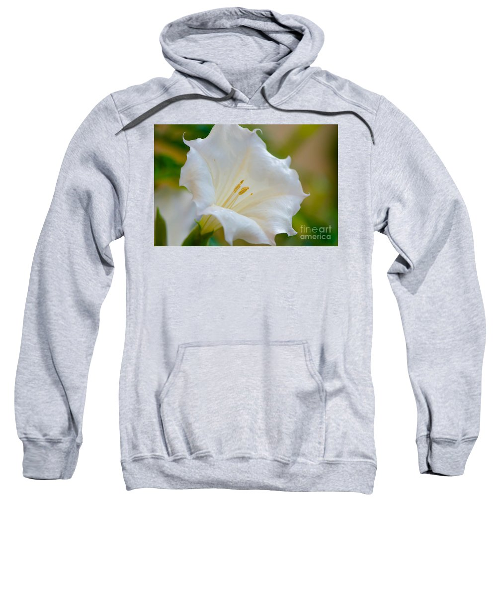 Datura Sweatshirt featuring the photograph Datura Hybrid White Flower by Michael Moriarty