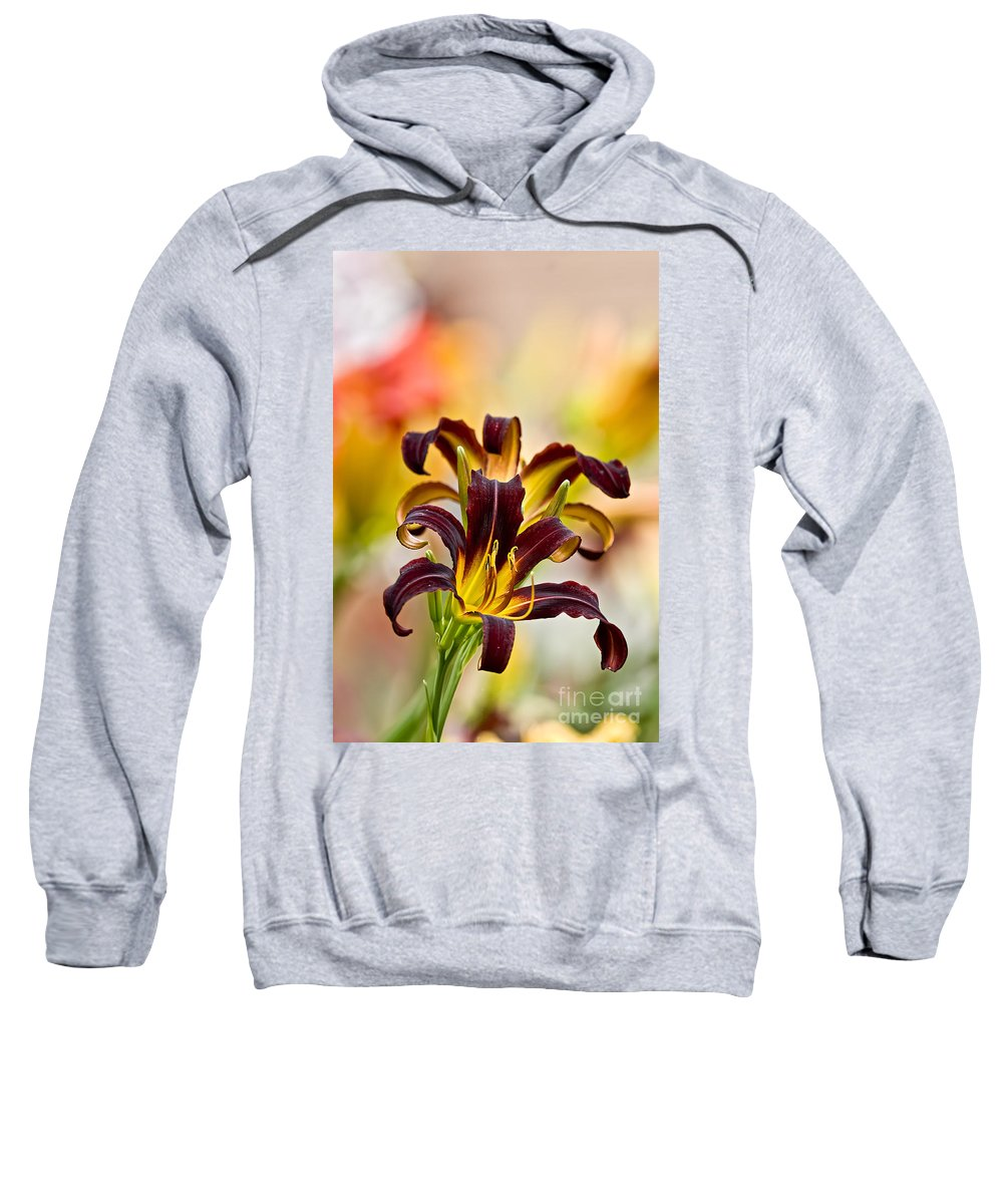 Daylily Sweatshirt featuring the photograph Daylily Picture 541 by World Wildlife Photography