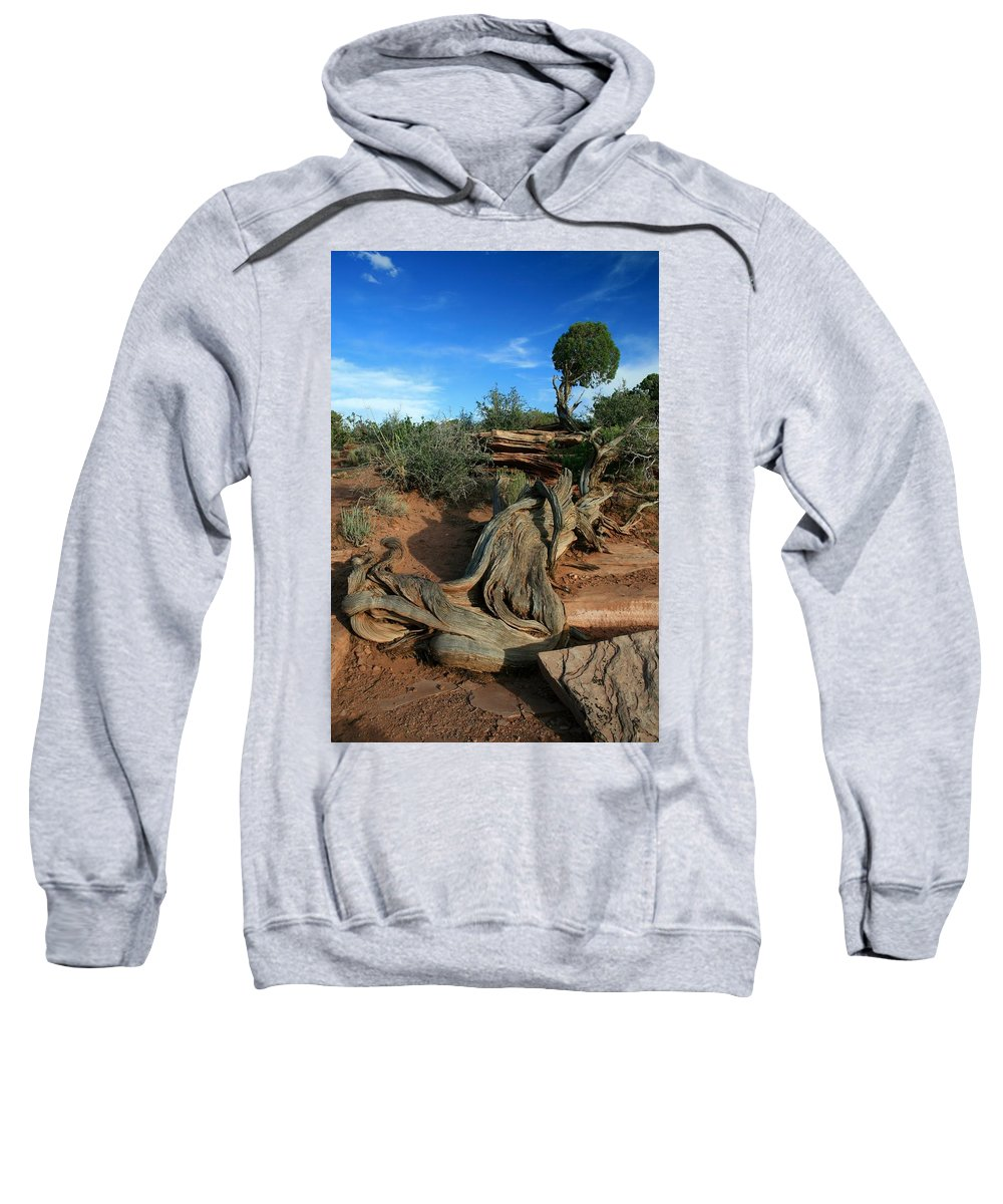 Dead Horse Point Sweatshirt featuring the photograph Dead Horse Point Tree 1 by Mo Barton