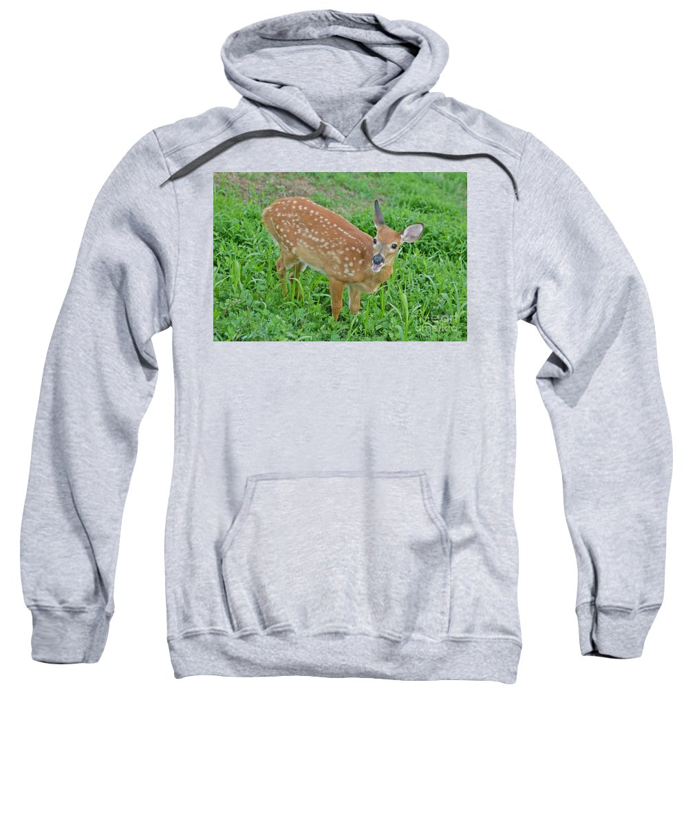 Deer Sweatshirt featuring the photograph Deer 20 by Cassie Marie Photography