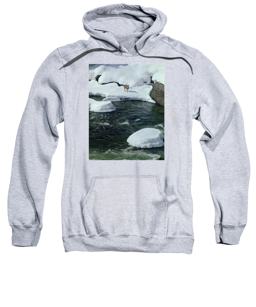 Deer Sweatshirt featuring the photograph 104618-v-deer On The Snow Bank by Ed Cooper Photography