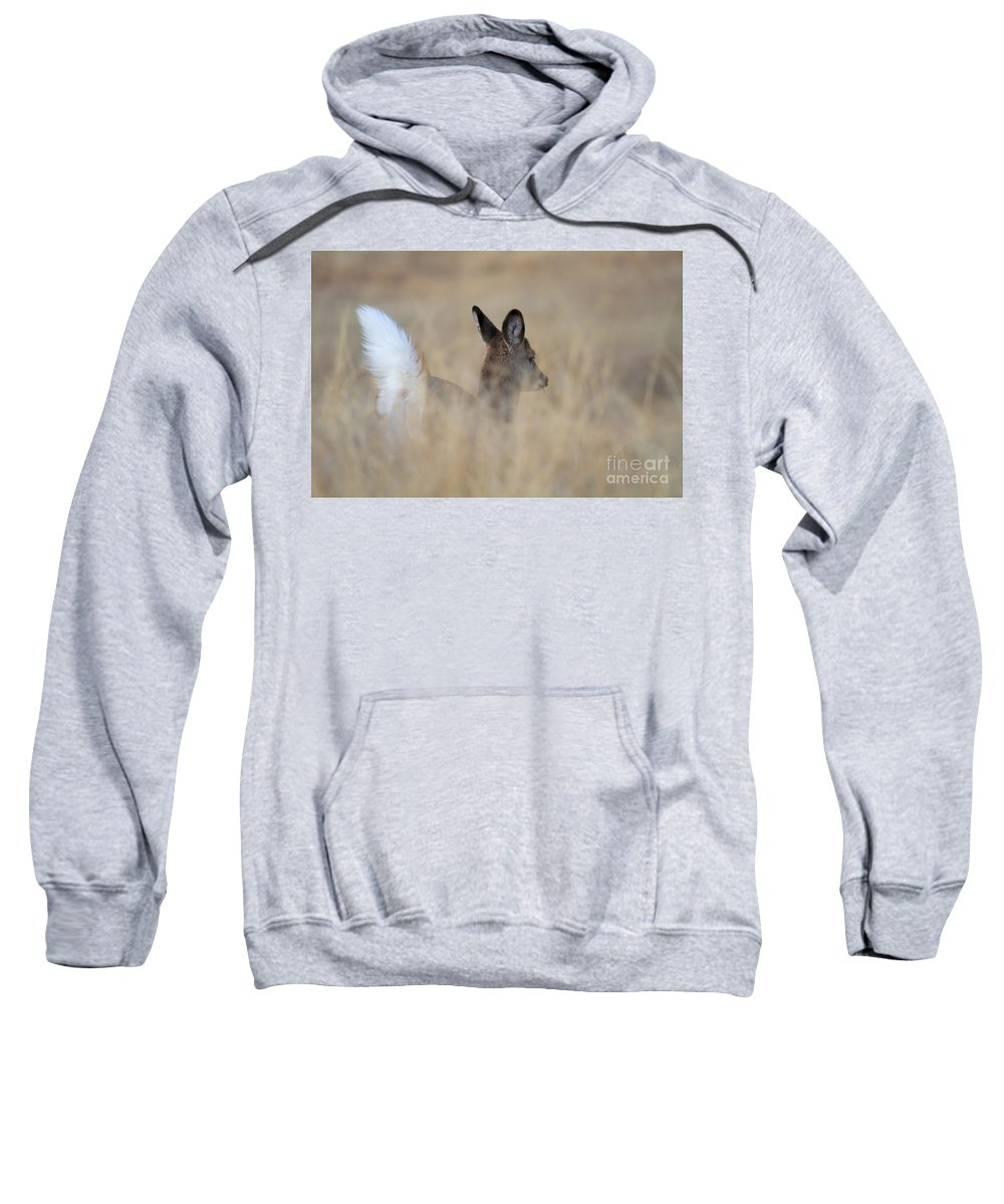 Whitetail Fawn Sweatshirt featuring the photograph Disappearing Act by Jim Garrison