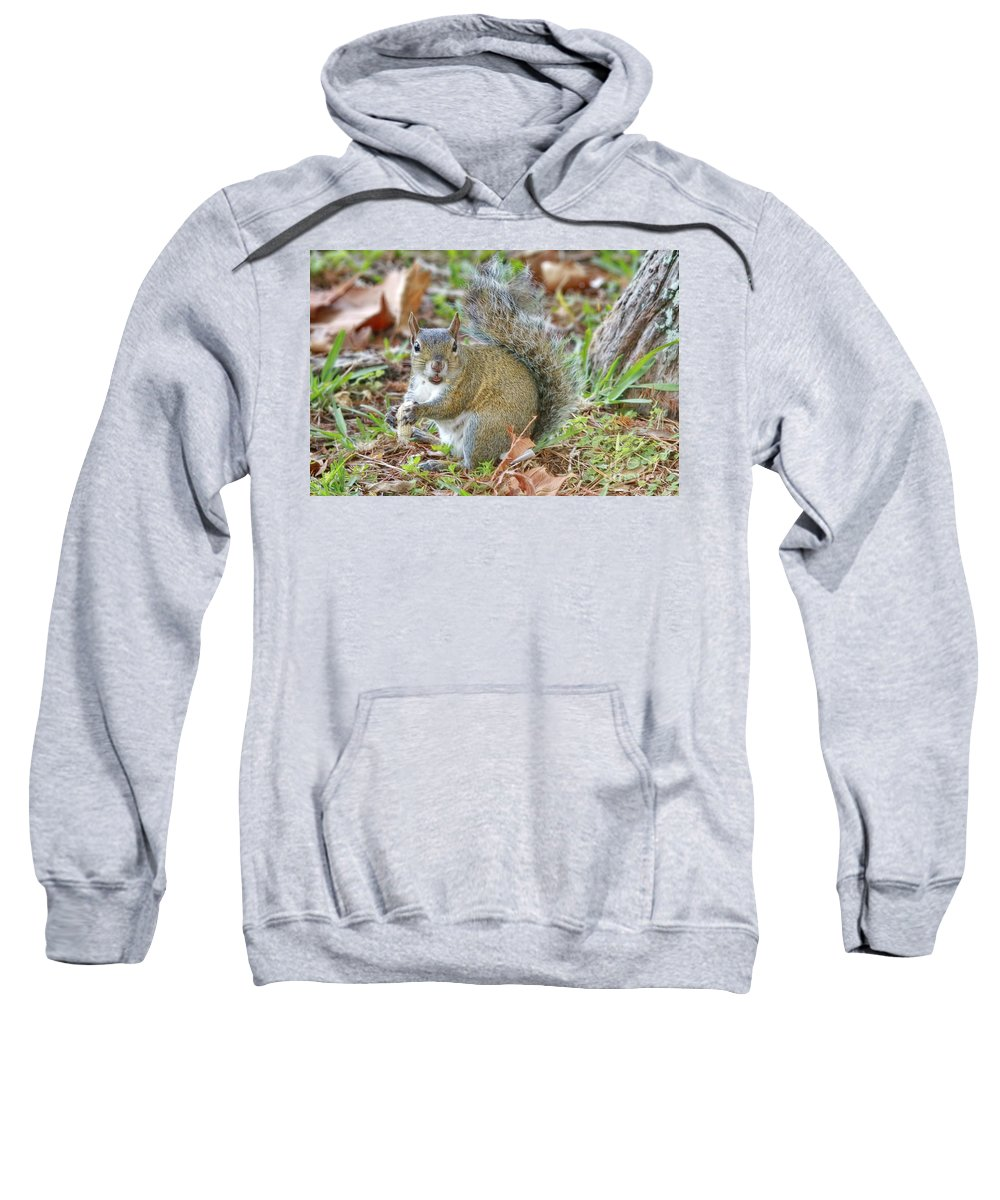 Squirrel Sweatshirt featuring the photograph Do I Have Any On My Face by Deborah Benoit