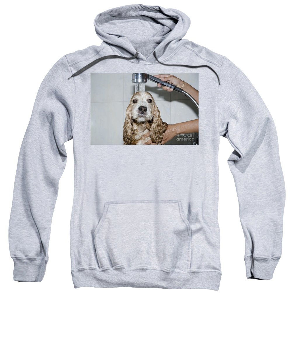 Dog Sweatshirt featuring the photograph Dog Taking A Shower by Mats Silvan