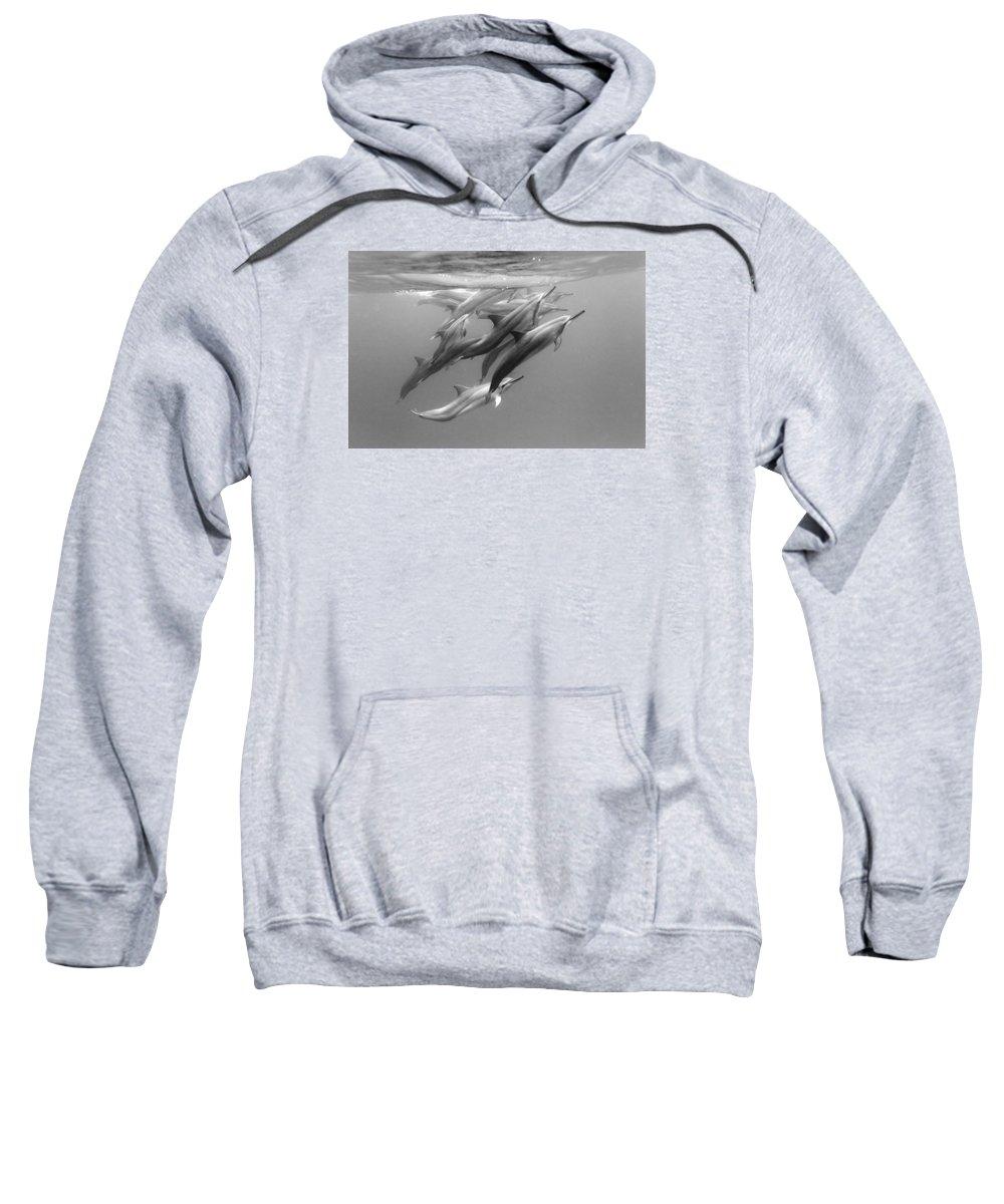 Ocean Under Water Sweatshirt featuring the photograph Dolphin Pod by Sean Davey