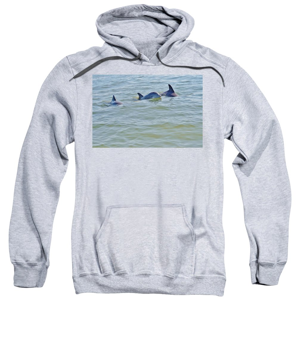 Dolphin Sweatshirt featuring the photograph Dolphins 2 by William Morgan