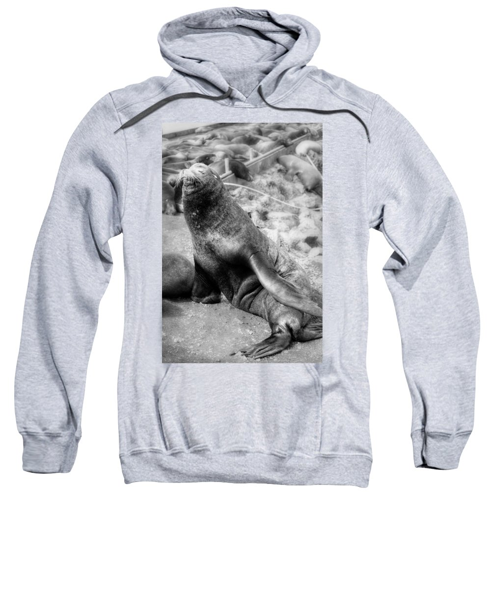 Seals. Seal Sweatshirt featuring the photograph Don Juan by Melanie Lankford Photography
