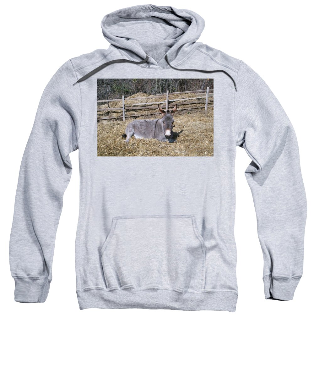 Animals Sweatshirt featuring the photograph Donkey In Hay by Zak