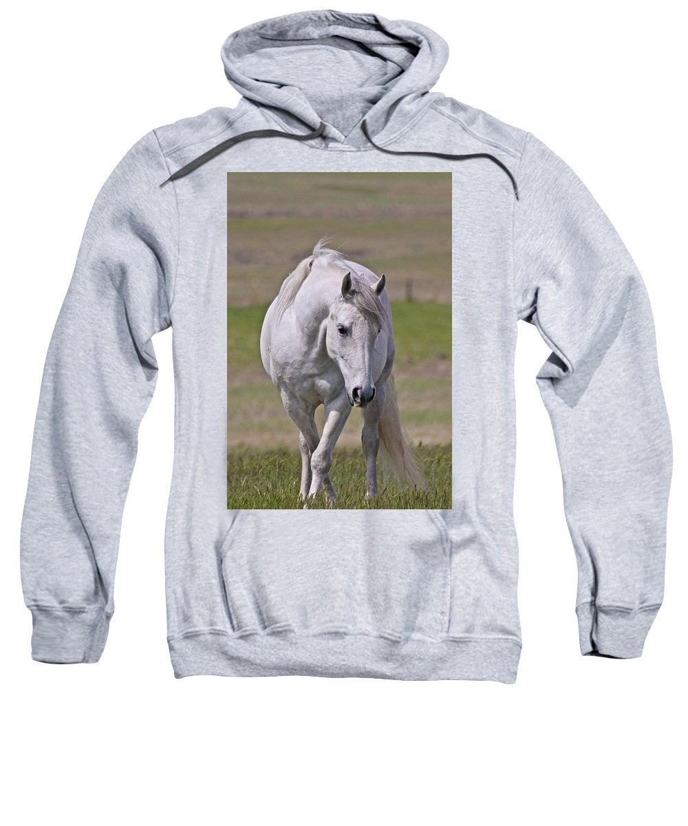 Horses Sweatshirt featuring the photograph Lipizzane Dreaming by Athena Mckinzie
