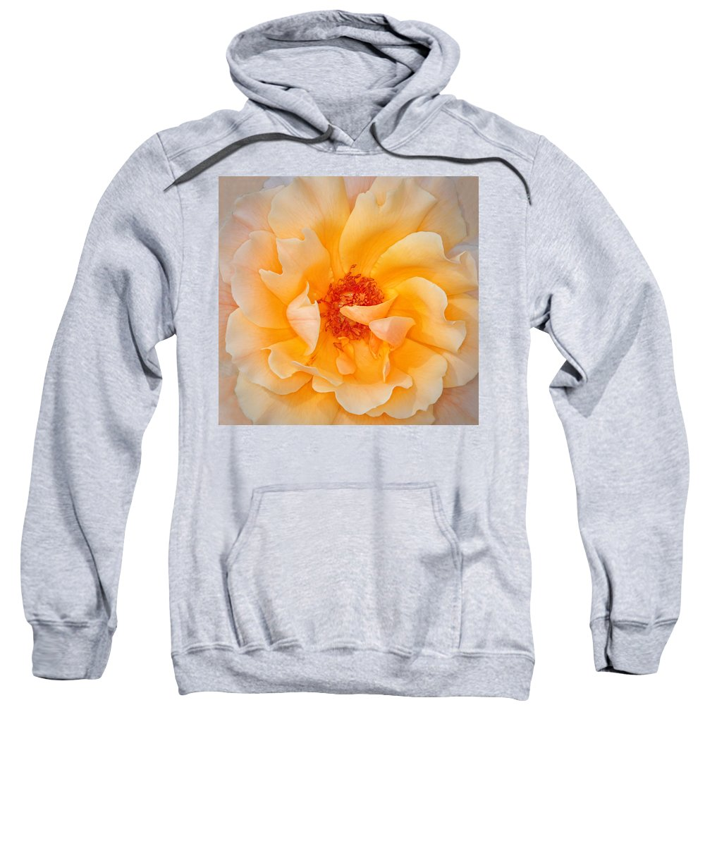 Rose Sweatshirt featuring the photograph Dreamy Orange Rose by Dave Mills