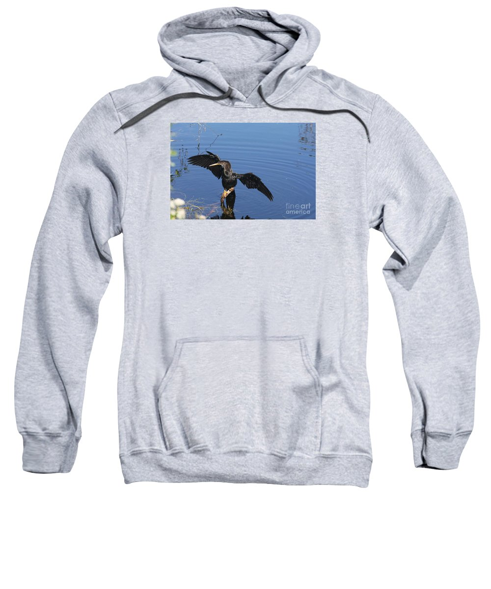 Anhinga Sweatshirt featuring the photograph Wet Anhinga by Christiane Schulze Art And Photography