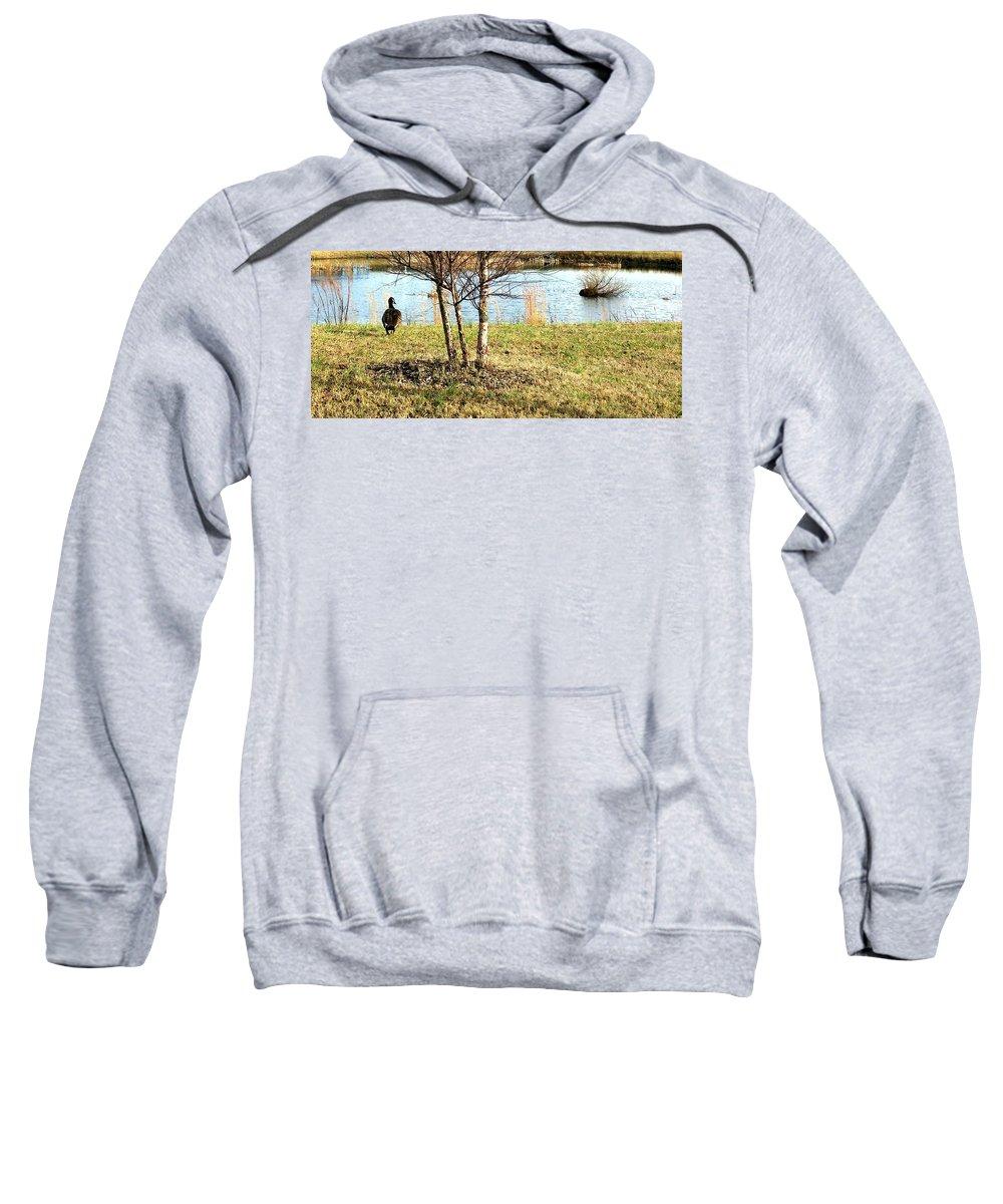Duck Sweatshirt featuring the photograph Duck Enjoying The View by Pamela Hyde Wilson