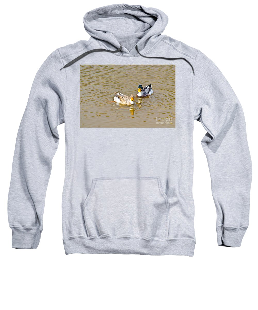 Anas Sweatshirt featuring the photograph Ducks Pair Looking To Camera by Image World