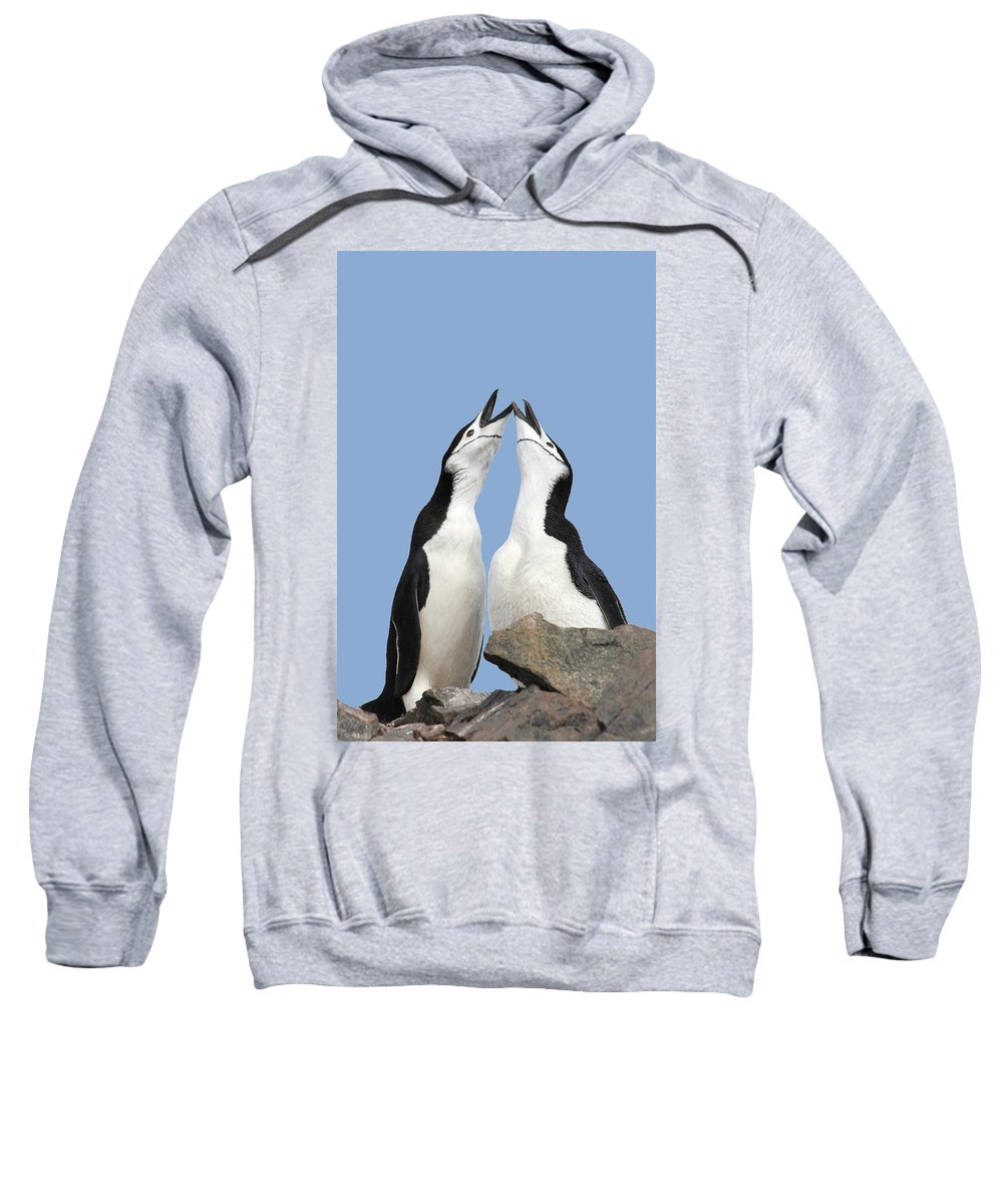 Wildlife Sweatshirt featuring the photograph Duet by Ginny Barklow