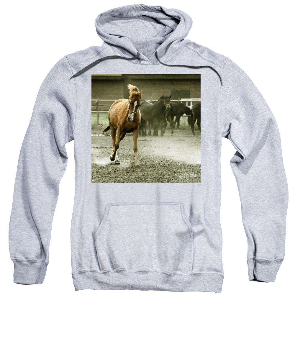 Paddock Sweatshirt featuring the photograph Dusty Paddock by Angel Ciesniarska
