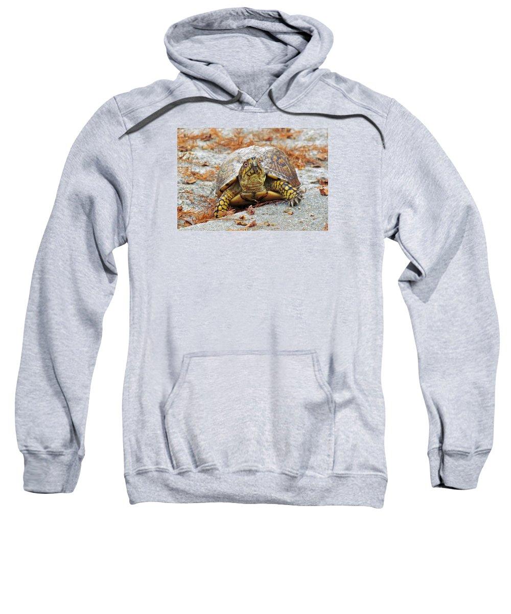 Box Turtle Sweatshirt featuring the photograph Eastern Box Turtle by Cynthia Guinn