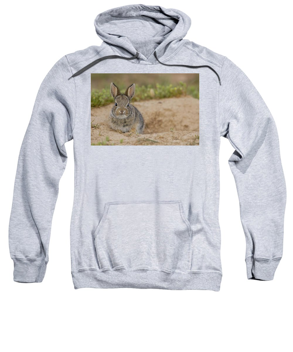 Burrow Sweatshirt featuring the photograph Eastern Cottontail Wyoming by Pete Oxford