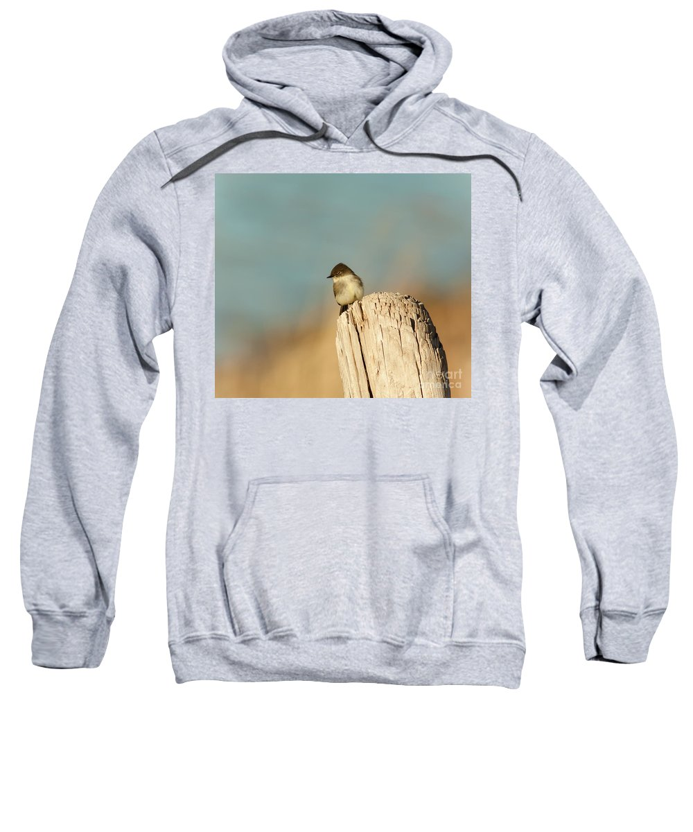 Animal Sweatshirt featuring the photograph Eastern Phoebe by Robert Frederick