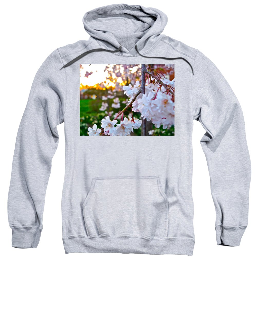 Flowers Sweatshirt featuring the photograph Einstein's Blossoms by Lexi Heft