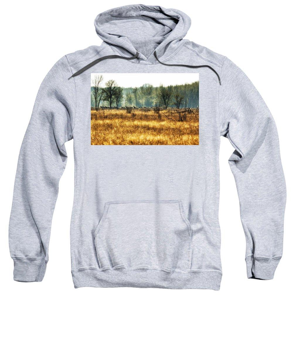Elk Sweatshirt featuring the photograph Elk In The Distance No. 2 by Belinda Greb