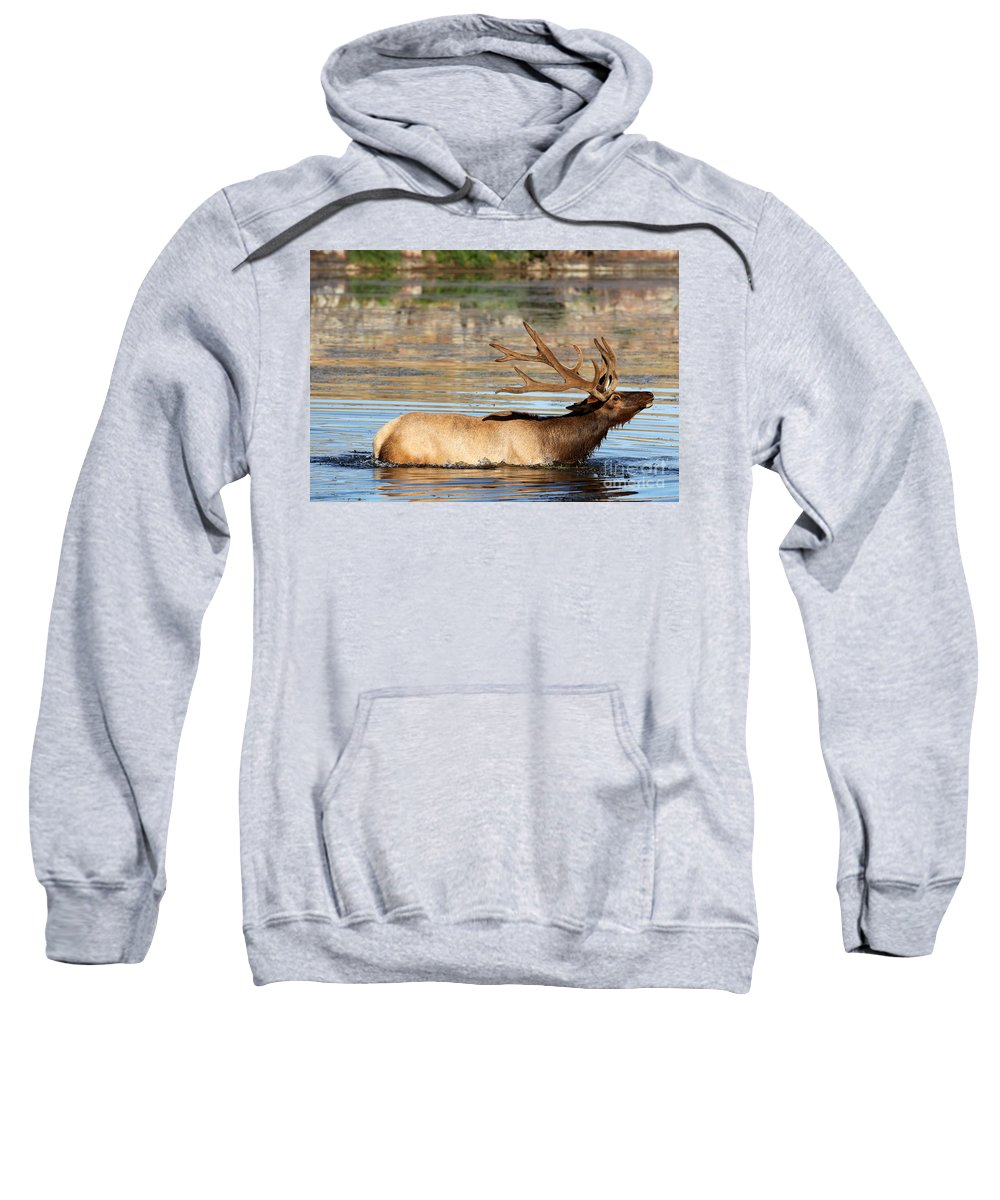Animal Sweatshirt featuring the photograph Elk Cooling Down In Lake by DS Dodd