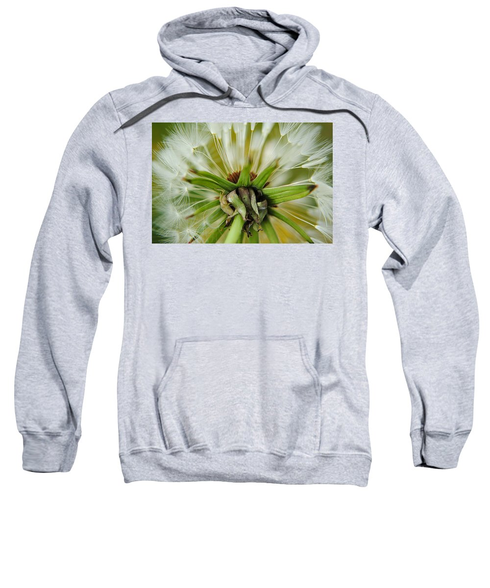 Dandelion Sweatshirt featuring the photograph Expired by Frozen in Time Fine Art Photography