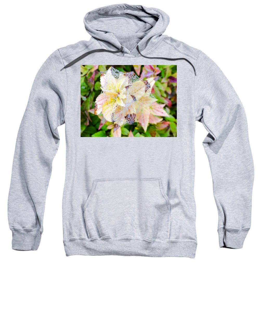 Fall Colors On A Foggy Day Sweatshirt featuring the photograph Fall Color On A Foggy Day 4 by Cynthia Woods