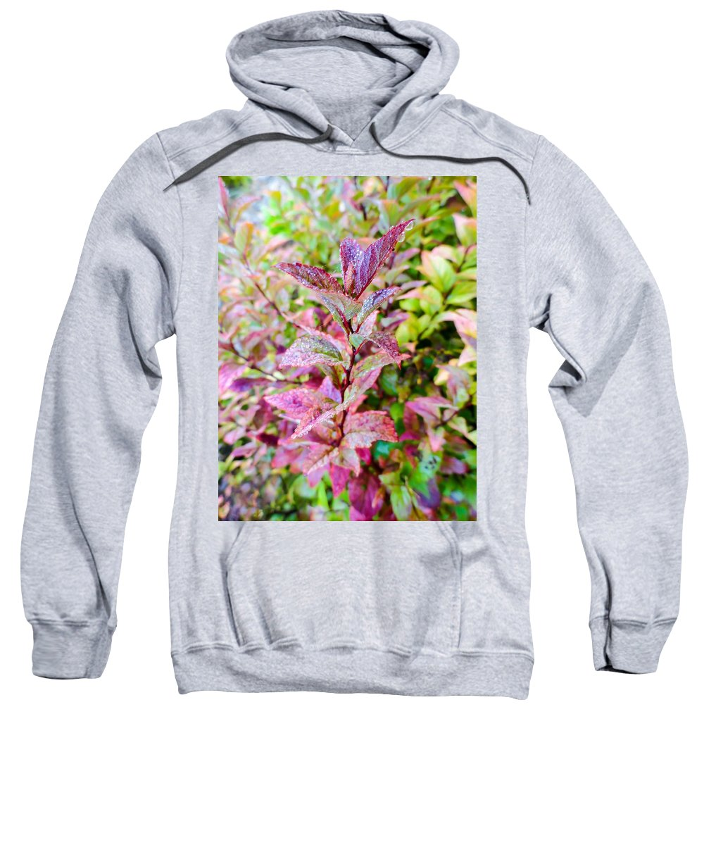 Fall Colors On A Foggy Day Sweatshirt featuring the photograph Fall Colors On A Foggy Day 2 by Cynthia Woods