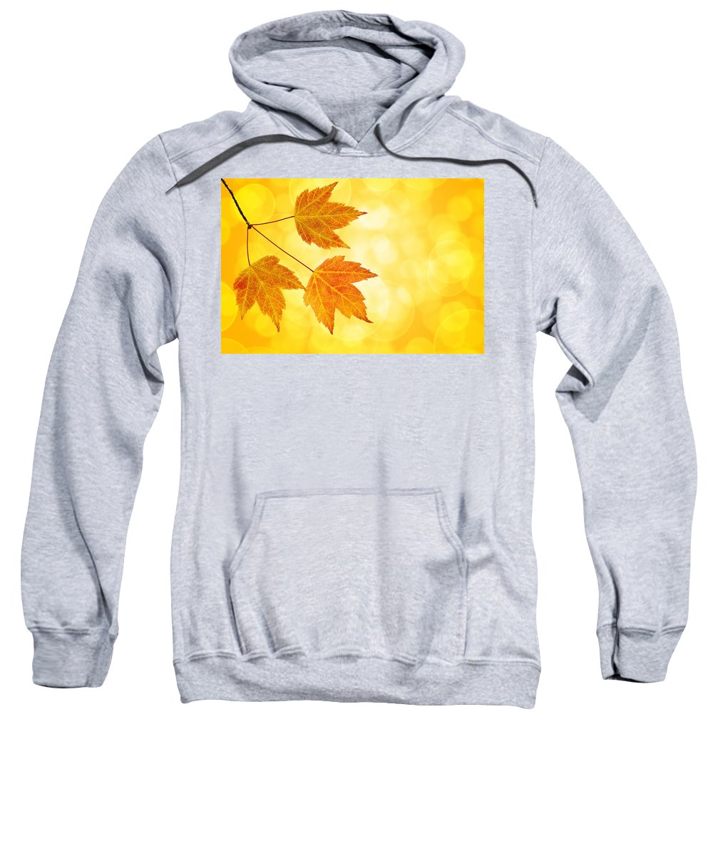 Fall Sweatshirt featuring the photograph Fall Maple Leaves Trio With Bokeh Background by Jit Lim