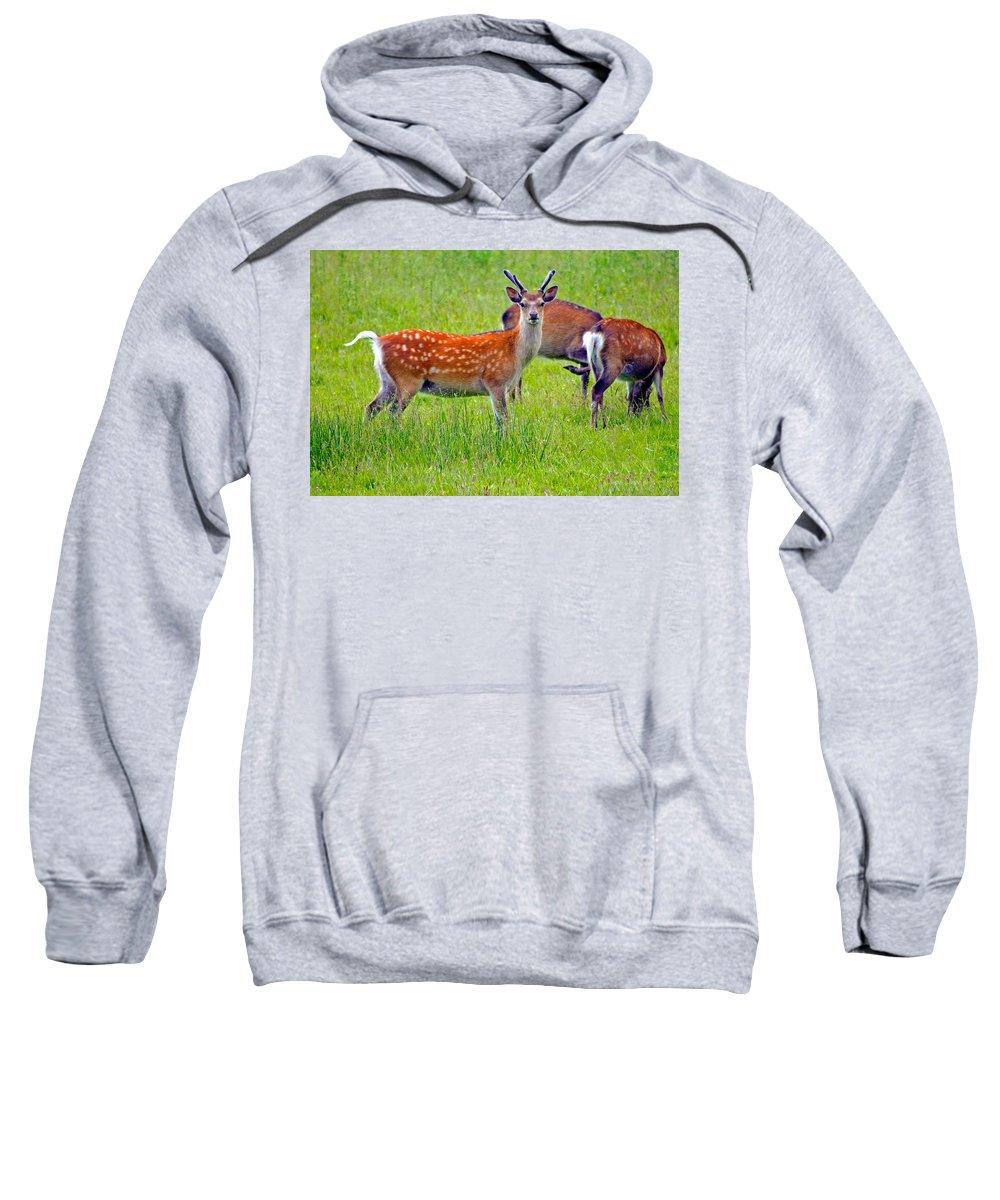 Fallow Deer Sweatshirt featuring the photograph Fallow Deer by Tony Murtagh