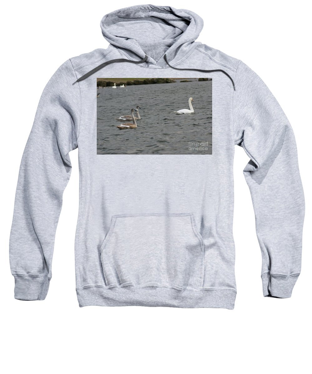 Swan Sweatshirt featuring the photograph Family Outing by Carol Lynch